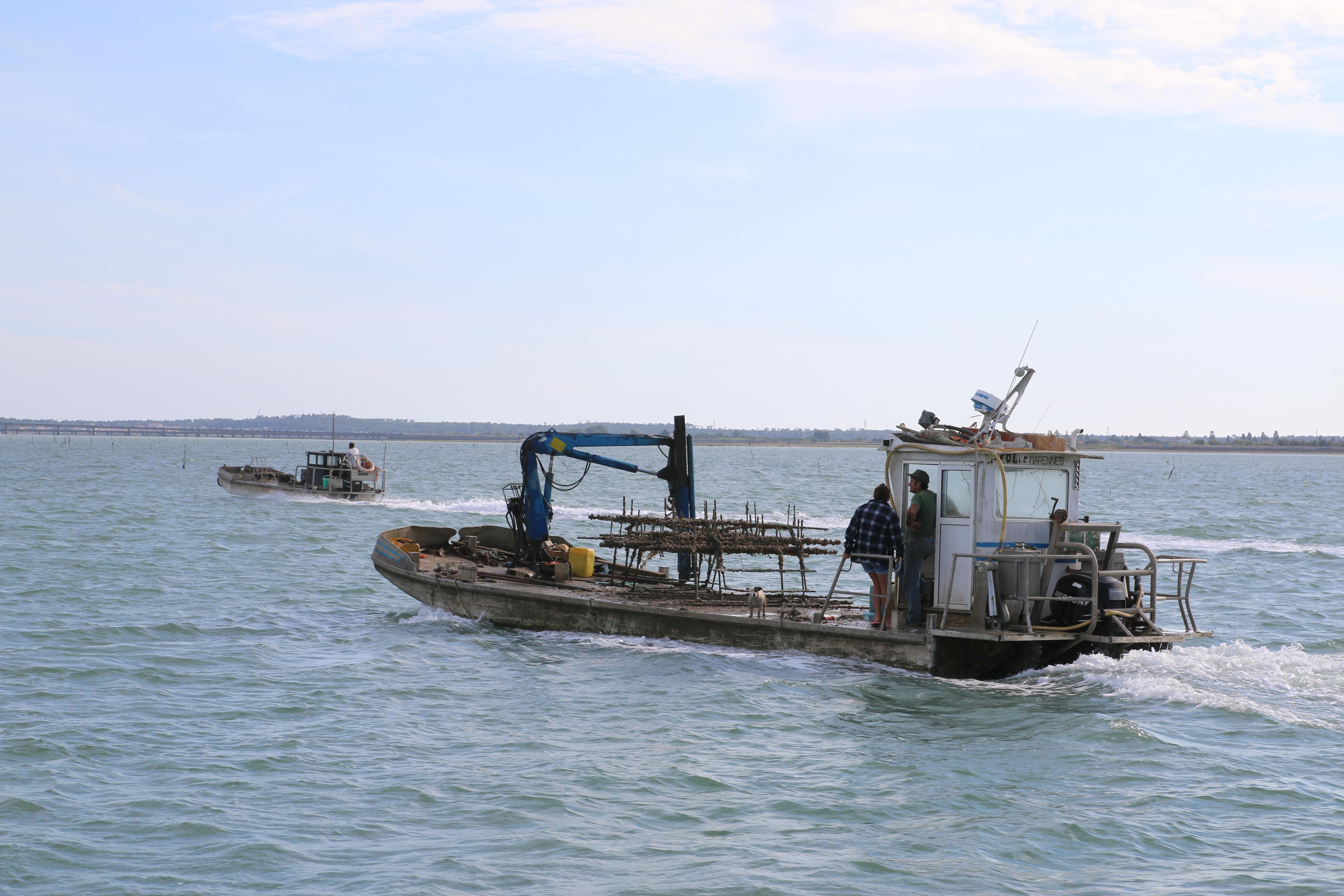 Barge ostréicole dans l'estuaire de la Seudre