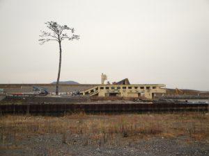Structure portuaire en baie de Miyagi. De la forêt de pins, il ne reste que le tronc d'un seul arbre. Copyright S. Ruitton
